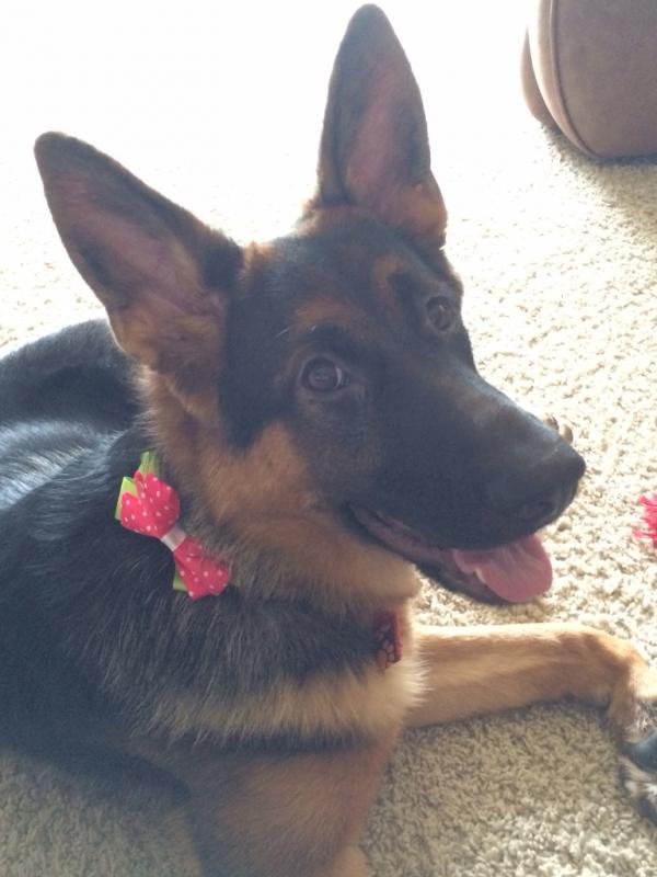 6 month old Bella girl-imageuploadedbypg-free1398134588.320778.jpg