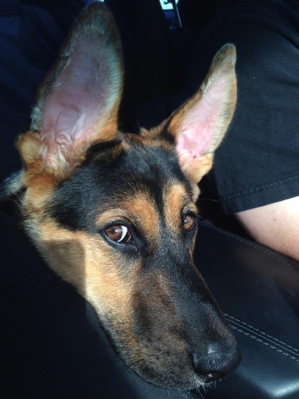 Love those ears!!!-imageuploadedbypg-free1400676945.826603.jpg