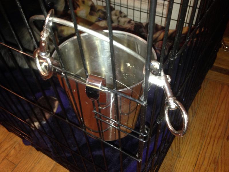 puppy pool-imageuploadedbypg-free1403333784.384096.jpg