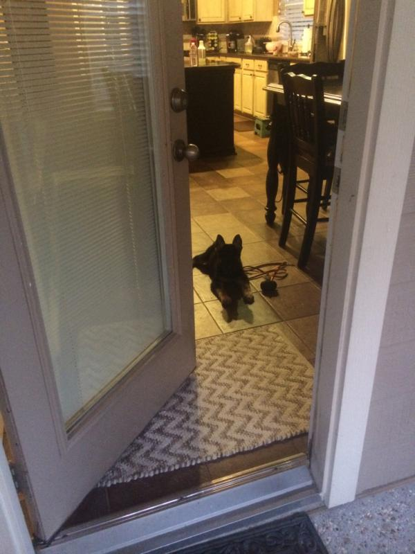 My new puppy hates outside!!-imageuploadedbypg-free1404092347.191580.jpg