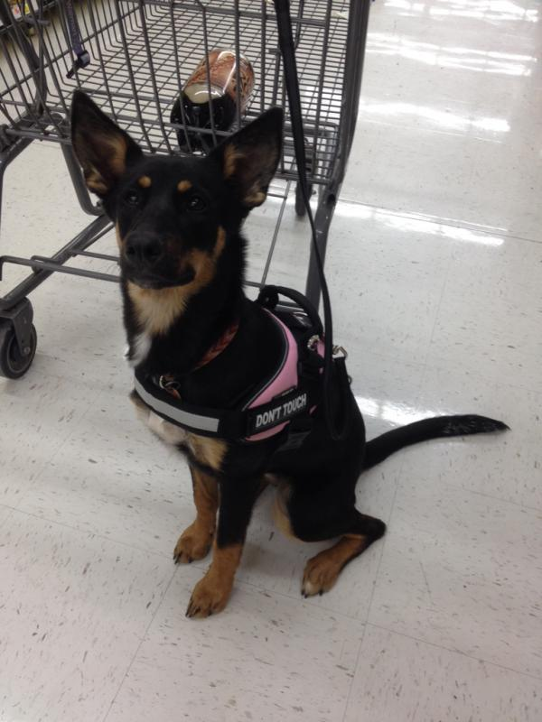 Arya is Six Months Old!!!-imageuploadedbypg-free1404416735.388969.jpg