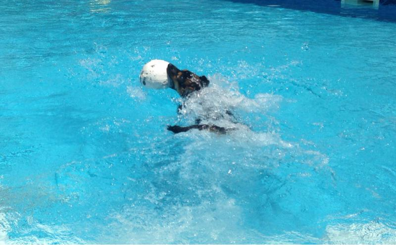 Show Me your swimming dogs-imageuploadedbypg-free1404770036.816297.jpg