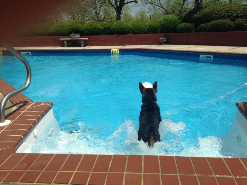 Show Me your swimming dogs-imageuploadedbypg-free1404770055.990331.jpg