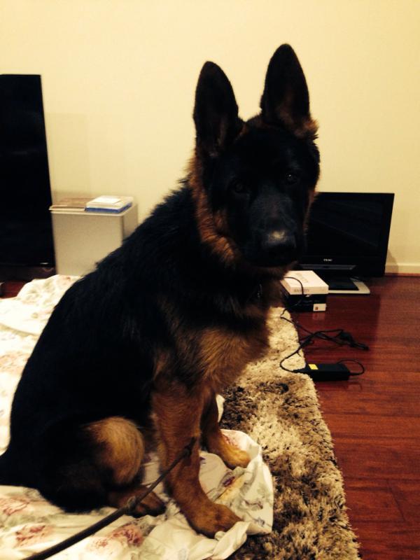 Rhino at 6months-imageuploadedbypg-free1407640435.072992.jpg