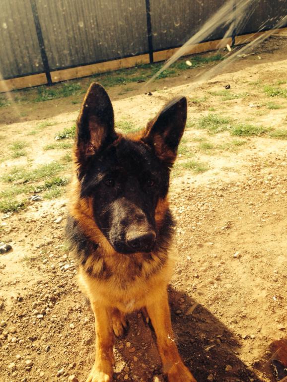 Rhino at 6months-imageuploadedbypg-free1407640874.492535.jpg