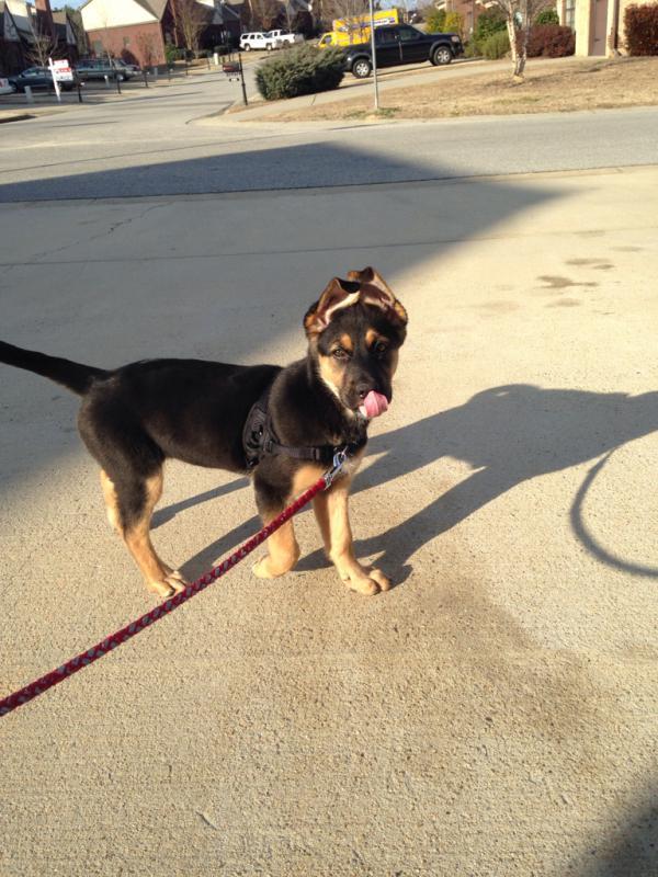 Mishka's ears, a timeline-imageuploadedbypg-free1409617216.943878.jpg