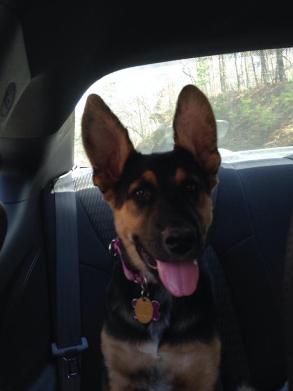 Mishka's ears, a timeline-imageuploadedbypg-free1409617367.677872.jpg
