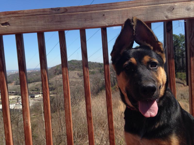Mishka's ears, a timeline-imageuploadedbypg-free1409617421.063429.jpg