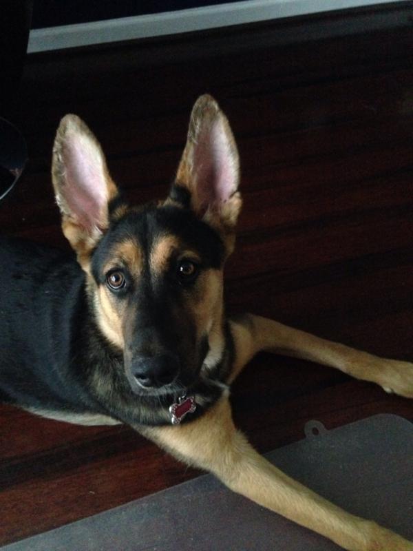 Mishka's ears, a timeline-imageuploadedbypg-free1409617607.076774.jpg