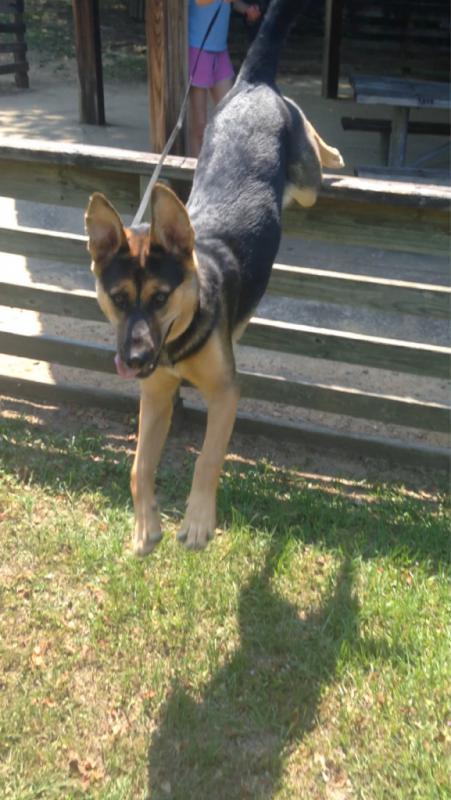 Mishka's ears, a timeline-imageuploadedbypg-free1409617627.353194.jpg