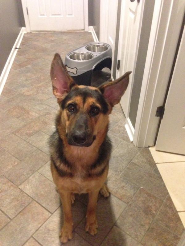 Mishka's ears, a timeline-imageuploadedbypg-free1409617671.020184.jpg
