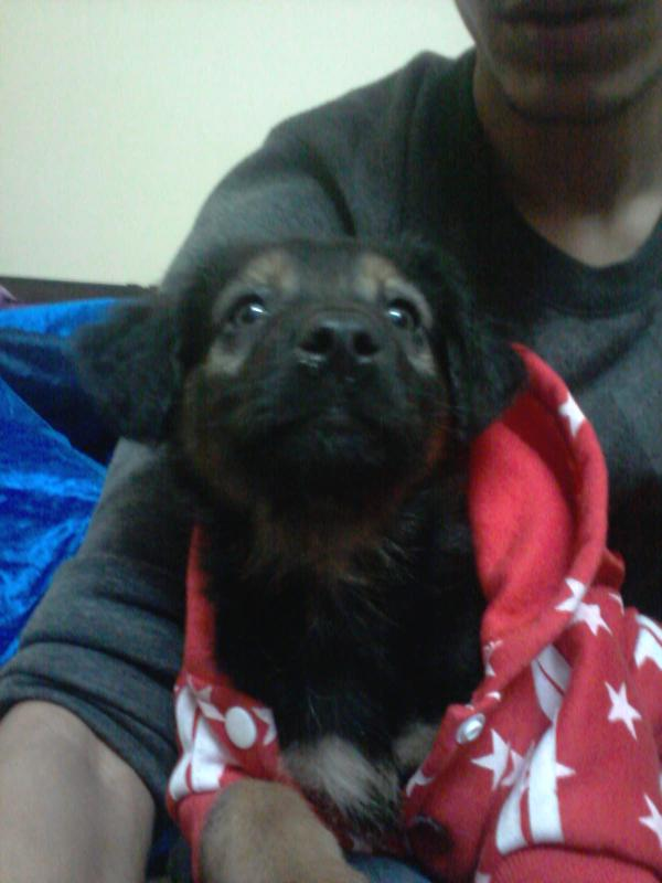 Please comment and advice of young puppy-img-20140126-wa0016.jpg