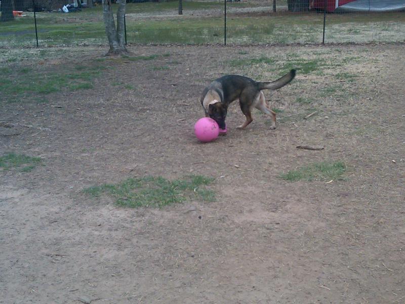 Pink collar check, pink leash check, pink jolly ball dbl check!-img00199-20110313-1118.jpg
