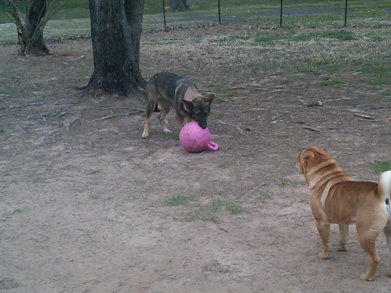 Pink collar check, pink leash check, pink jolly ball dbl check!-img00204-20110313-1122.jpg