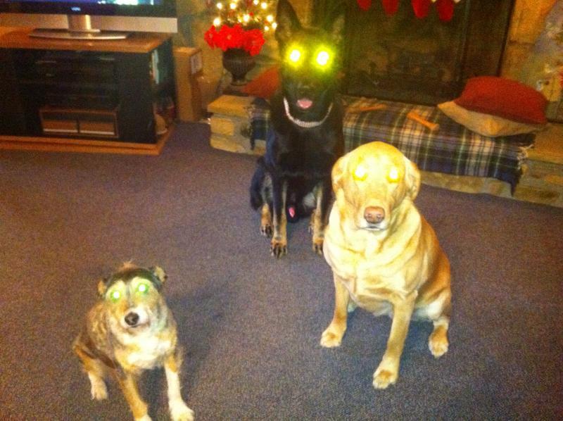 """Let's see those """"laser eyes"""" pics-img_0048.jpg"""