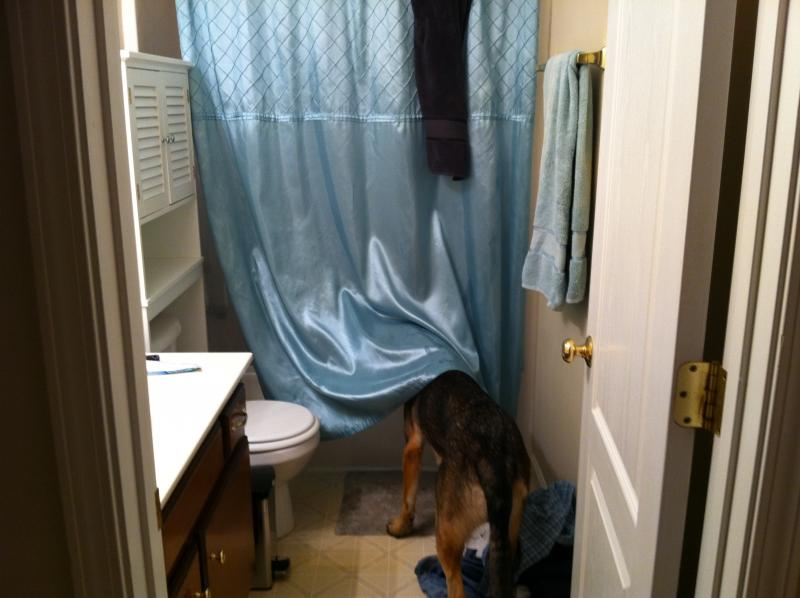 Does your GSD like water?-img_0264.jpg
