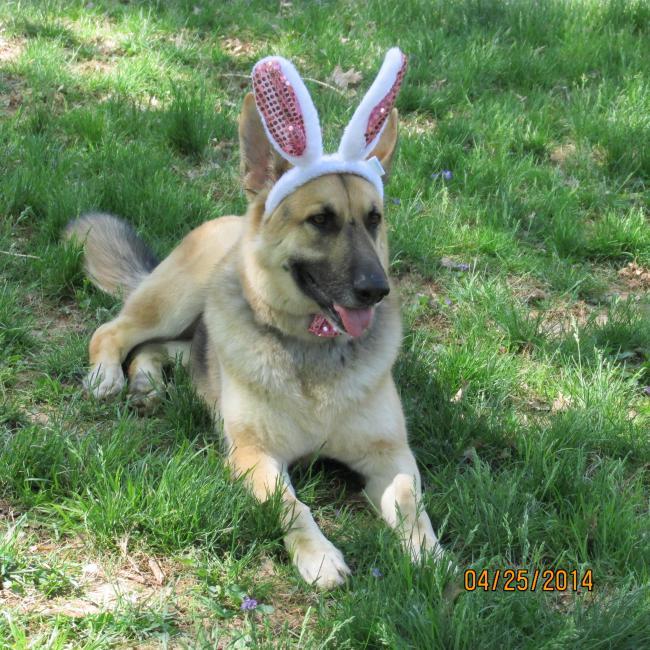 My Easter Bunny-img_0450.jpg