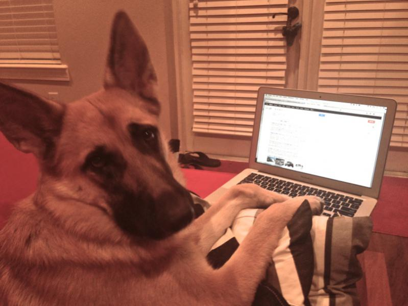 Karma likes the forums too!-img_0612.jpg
