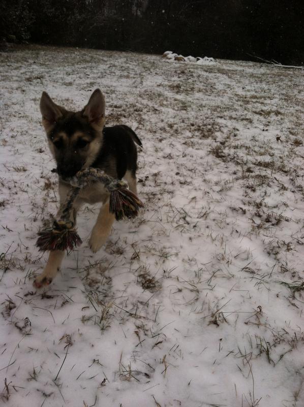 Nova's First Snow-img_1117.jpg