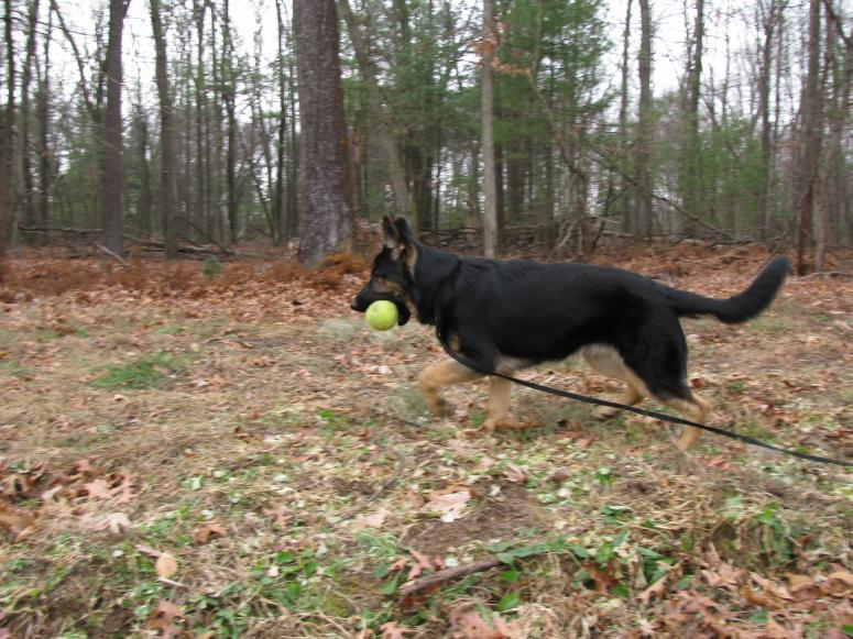 Hoby at 6 1/2 months-img_1246.jpg