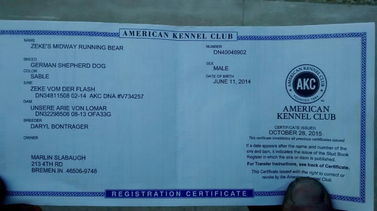 akc registered dog has no pedigree