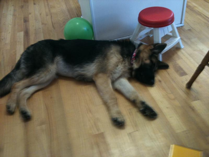 Adopted a 6 month old today-img_2021.jpg