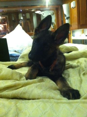 diesel, our new puppy-img_2043.jpg
