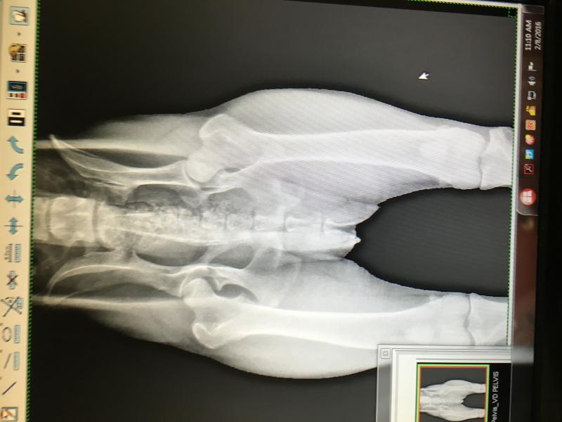 1y/o male hip issues-img_2655.jpg