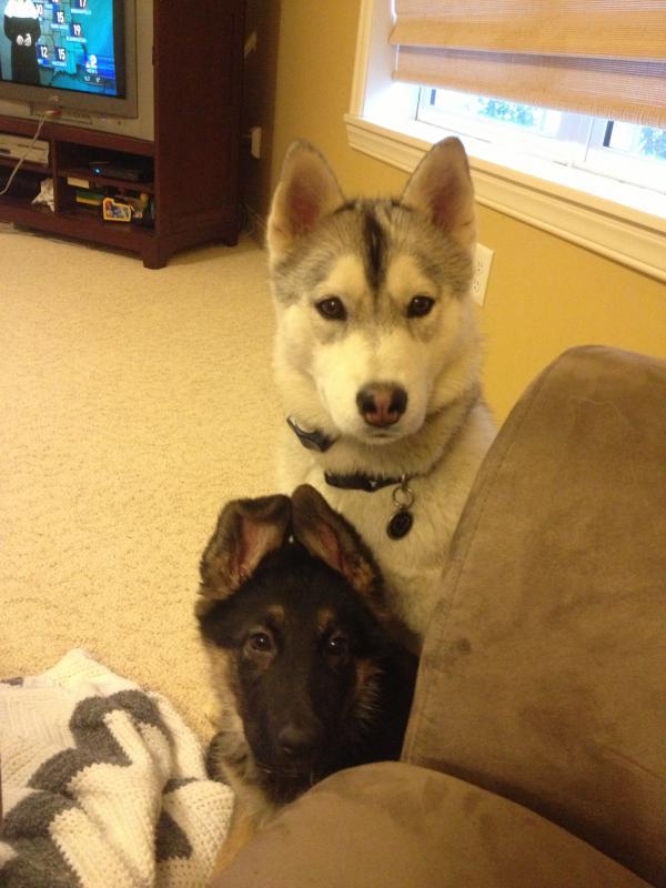 Puppy Agnes 3 weeks to 10 wks EARS!-img_3256.jpg