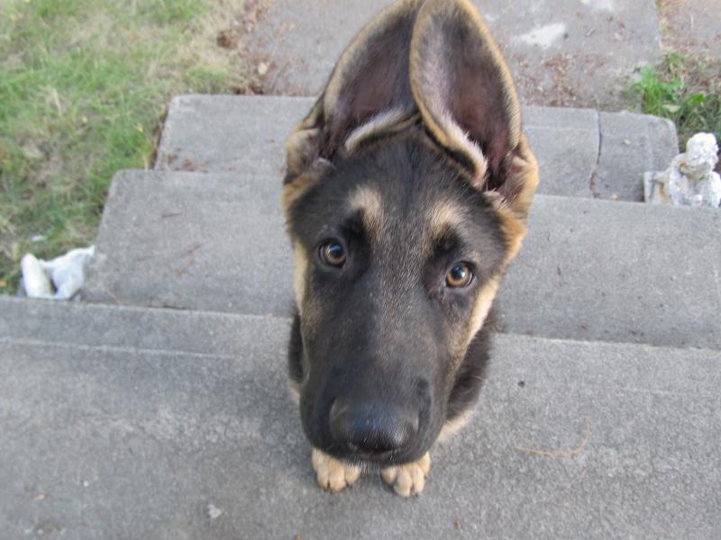 My pup!! Cute as can be!-img_3301.jpg