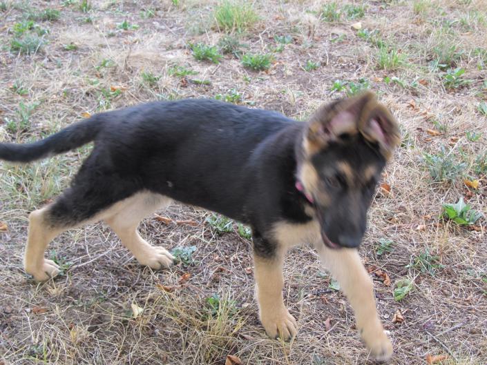 My pup!! Cute as can be!-img_3317.jpg
