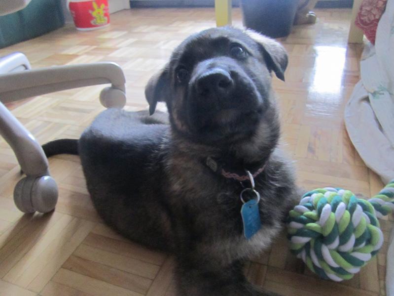 new pup Koda (7 weeks)-img_3348.jpg