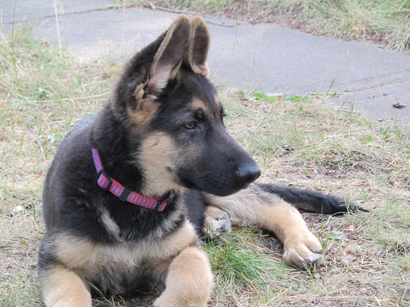 My pup!! Cute as can be!-img_3375.jpg