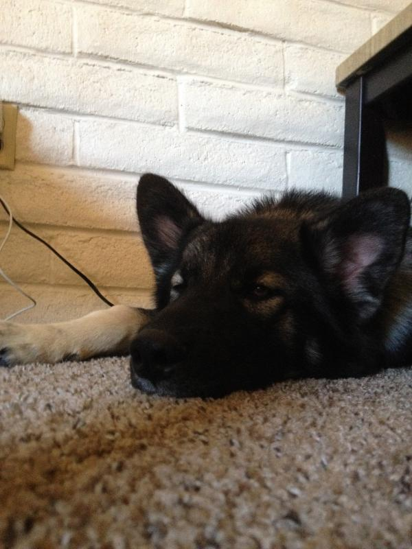 Introducing Our New Foster Baby, Uther!-img_3704.jpg
