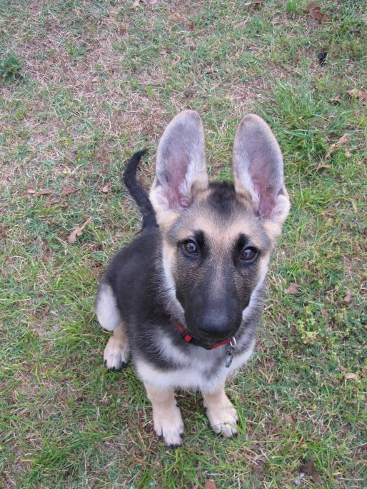 Show me those big eared pups!!!-img_3942.jpg