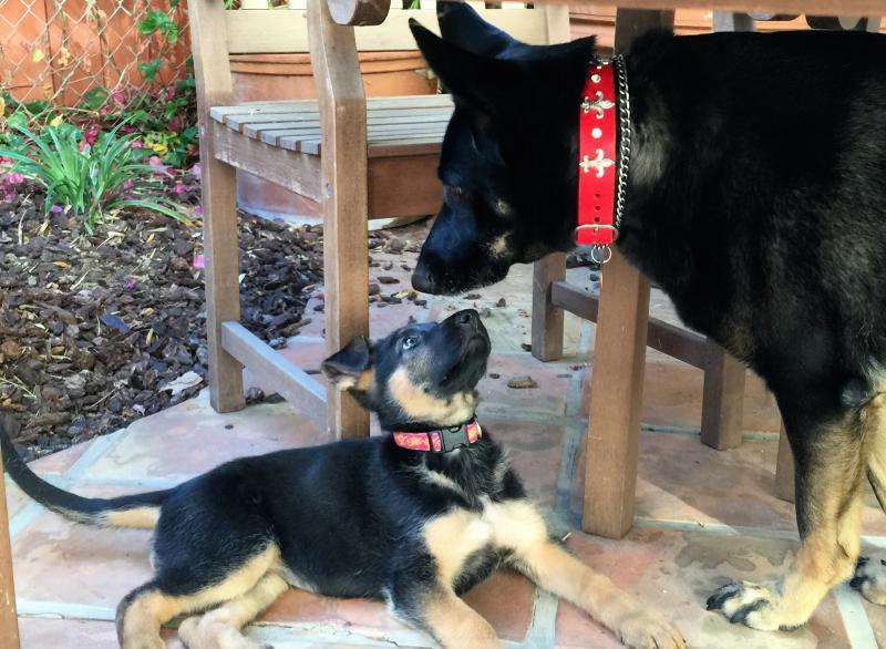 Meet Luna and Ivy-img_4101.jpg