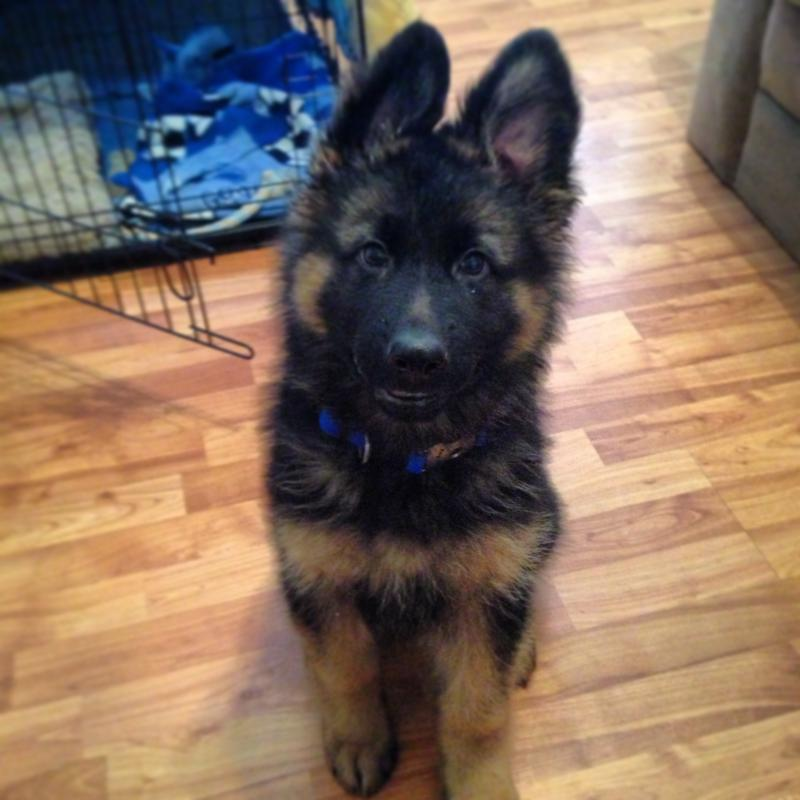 Krieger is 13 weeks-img_4397.jpg