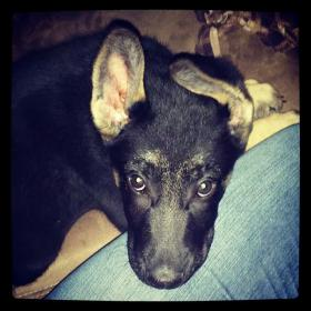 My boy Zeus-img_62746648887282.jpg