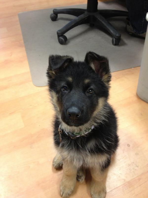 Puppy Agnes 3 weeks to 10 wks EARS!-img_7673.jpg