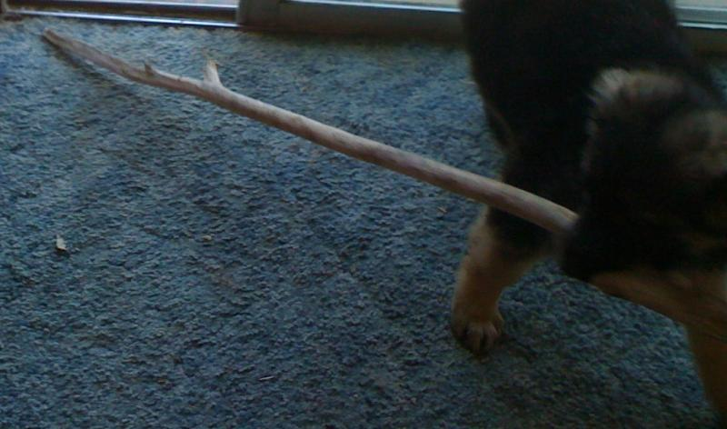 Why the biggest stick in the forest?-jadas-big-stick.jpg