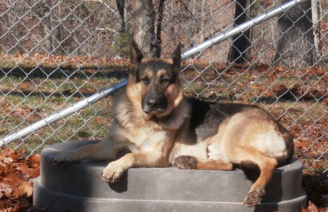 New owner of two GSD!-jake-tub.jpg