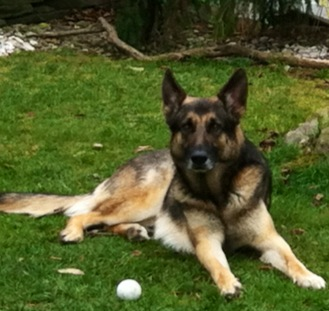 Happy 7th Birthday Joey!-joey-backyard.jpg
