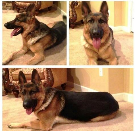 Lost or Stolen GSD-kc-hanging-kids.jpg