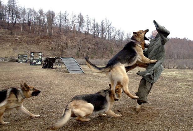 Name:  Kim-Uncle-Mauled-Dogs_022893698091.jpg Views: 1355 Size:  144.3 KB