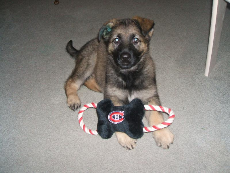 Show me your baby on his/her first day home! (no matter what age)-koda-day2-1-.jpg