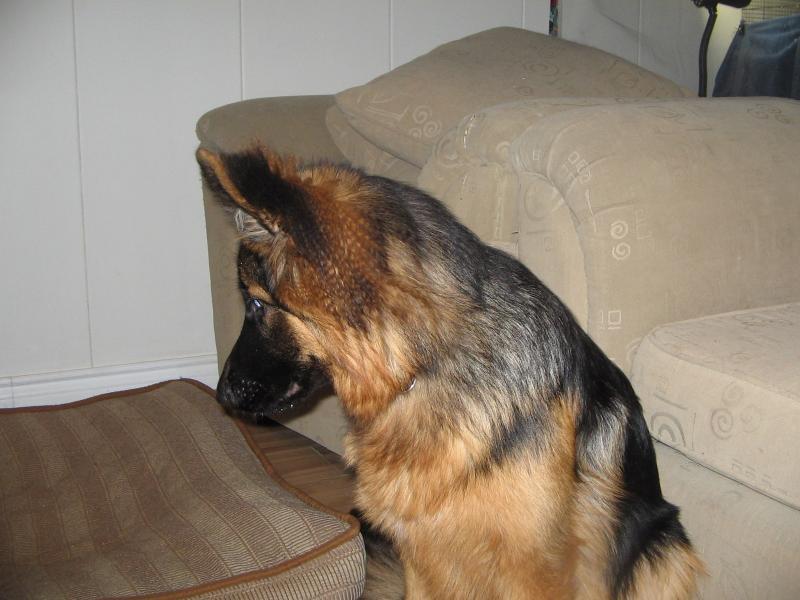 Show Me Those EAR FLOOFIES!-kyleigh-jan-2012-002.jpg