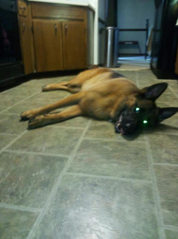 """Let's see those """"laser eyes"""" pics-laser..jpg"""