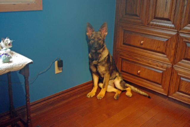 What is your puppys favorite toy? or your favorite to keep them busy?-maggie-20-weeks.jpg