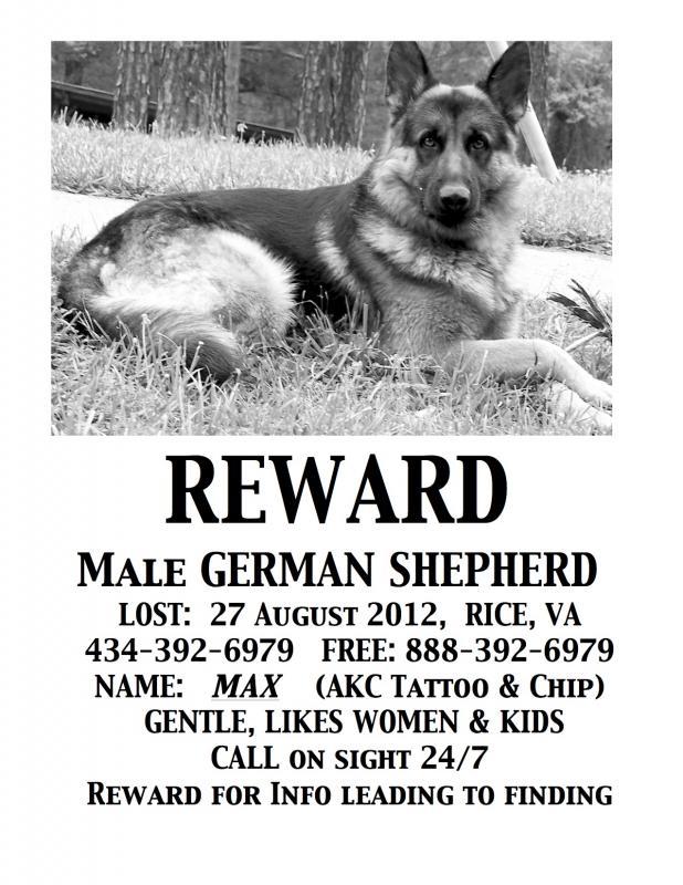 Missing Male GSD Farmville, VA-max-reward-ad-2012.-jpeg.jpg