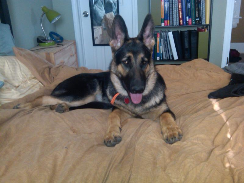 My two huge puppies-meatball1-6-mos.jpg